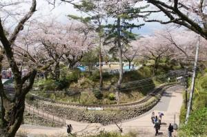 小田原城 桜まつり