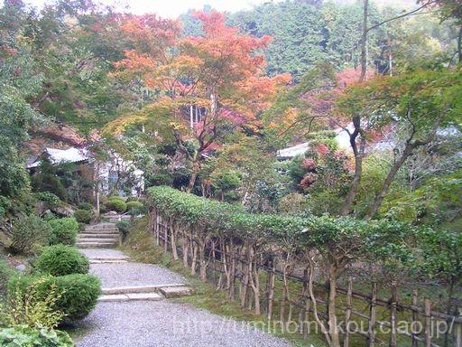 長浜城と小谷城の旅(9) 近江狐蓬庵で秋を楽しむ