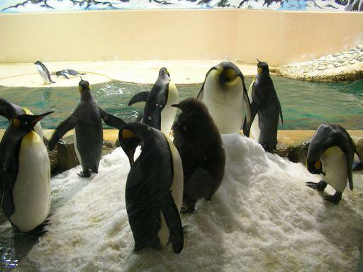 南紀白浜の癒され旅(3) アドベンチャーワールドで1日遊びつくす!