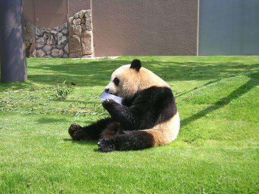 南紀白浜の癒され旅(7) どのパンダも食事は必死なのです♪