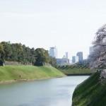 江戸城の桜