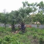 Banteay Sreiへ